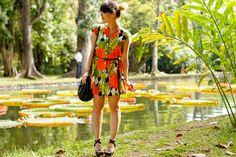 Botanic Garden, Pamplemousses, Mauritius Island