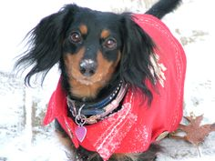 Daisy . . Christmas 2010