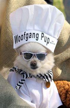 woofgang pup