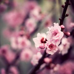 pink blossom love