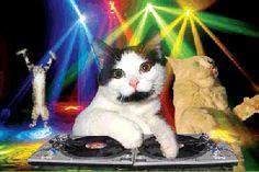 New party member! Tags: music dancing party cats singing dj disco karaoke