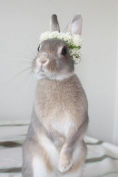 Sødeste lille bryllupskanin