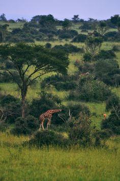 Safari to Murchison Falls