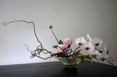 dahlia - orchidée