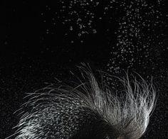 Textura de puas de puerco espin de color plomo y negro