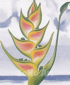 Heliconia by Georgia O'Keeffe, 1939. Oil on canvas, 19 x 16""
