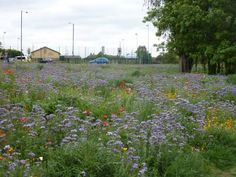 Meadows in parks - London Borough of Richmond upon Thames Richmond Upon Thames, Richmond Park, Parks, London, Ideas, London England, Park, Parkas