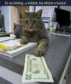 Funny Buy A Dog Funny Animals Pictures. Cat Jokes, Funny Cat Memes, Cats Humor, Funny Humor, Funny Animal Pictures, Funny Animals, Cute Animals, Funniest Animals, Animal Funnies