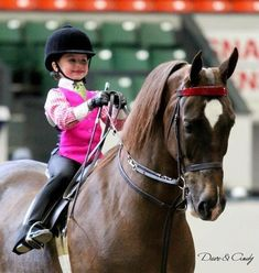 Saddlebreds are The Best! Really take care of their riders...