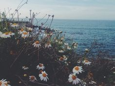 Flowers by the sea