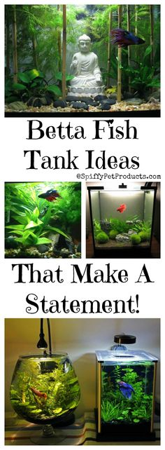 Betta Fish Tank Setup Ideas That Make A Statement! - Spiffy Pet Products Betta Fish Tank Setup Ideas<br> Betta fish tank setup ideas that are as stylish as they are good for your pet fish. Definitely NOT your Grandma's betta bowls! Betta Aquarium, Tropical Fish Aquarium, Tropical Fish Tanks, Fish Ocean, Nature Aquarium, Fish Fish, Aquascaping, Fisher, Small Fish Tanks