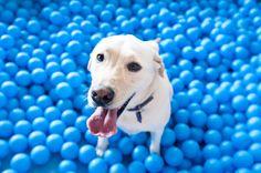 Pet & Play foi um evento que aconteceu em diversos shoppings em São Paulo. Um parque de diversão feito especialmente para os pets. A Leica foi lá conferir e aprovou! Vem ver! ♡ Comentários comentários