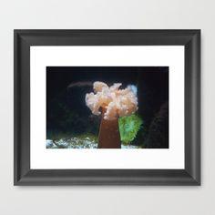 Baltimore Aquarium Series 17 by Sarah Shanely Photography $31.00