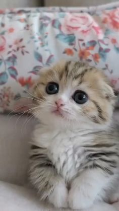 Discover recipes, home ideas, style inspiration and other ideas to try. Funny Cute Cats, Cute Baby Cats, Cute Cats And Kittens, Cute Funny Animals, Cute Baby Animals, Kittens Cutest, Cute Dogs, Super Cute Kittens, Cats In Love
