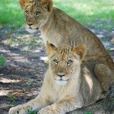 Did you know that Palm Beach County is home to Florida's largest drive-through safari? See how one family spends a fun filled day at Lion Country Safari.