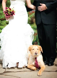 Doggies at green weddings  ~*~What a snazzy pup in his tie.~*~SB