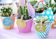 DIY Mini Succulent Favors :: Mami Talks #babyshower #babyshowerfavor #favor #favors #succulents #minisucculents #succulentfavors