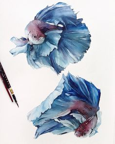 🎨 More art: 👈⠀ ⠀ Watercolorist: ⠀ Watercolor Fish, Watercolor Animals, Watercolor Illustration, Fish Drawings, Animal Drawings, Art Drawings, Drawing Art, Watercolor Paintings For Beginners, Watercolor Techniques