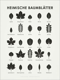 Iris Luckhaus - native tree leaves-Iris Luckhaus – Heimische Baumblätter Local tree leaves posters at Posterlounge ✔ Low-cost shipping ✔ Purchase on account ✔ Different materials & sizes ✔ Order now! Iris, Bushcraft Camping, Bushcraft Backpack, Bushcraft Skills, Bushcraft Gear, Animal Tracks, Diy Projects For Beginners, Camping Photography, Real Plants