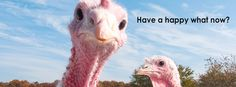 Our #Thanksgiving #Facebook cover image! Do you like? https://www.facebook.com/MarketingDivas