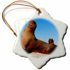 3dRose South America, Ecuador, Galapagos. Sea Lions on Mosquera Island., Snowflake Ornament, Porcelain, 3-inch