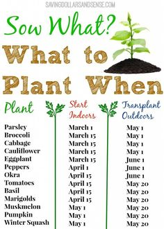 out this handy gardening chart to know when to start growing your seeds indoors and when to transplant them outdoors.Check out this handy gardening chart to know when to start growing your seeds indoors and when to transplant them outdoors. Organic Gardening, Gardening Tips, Hydroponic Gardening, Gardening For Beginners, Gardening Books, Urban Gardening, Gardening From Seeds, Planting Seeds Outdoors, Planting Sunflower Seeds