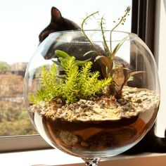 Forget the Flowers — Add Terrariums to Your Wedding Instead!