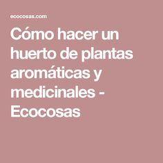 Cómo hacer un huerto de plantas aromáticas y medicinales - Ecocosas