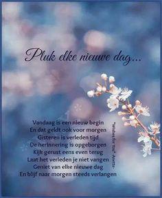 .pluk een nieuwe dag