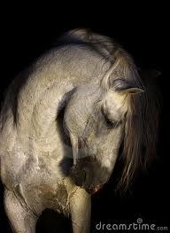 andalusian horses - Google Search