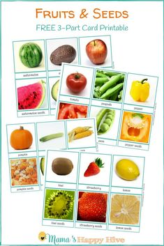 "This lovely ""Fruits and Seeds"" printable matches together some of our favorite fruits with their seeds. I created this printable to be a conversation starter with the child. The fruit and the seeds are the beginning and ending of the plant life-cycle. Seeds Preschool, Preschool Garden, Preschool Science, Kid Science, Physical Science, Earth Science, Science Activities, Fruit And Veg, Fruits And Veggies"
