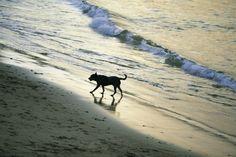 Best Dog Friendly Beaches In Sydney