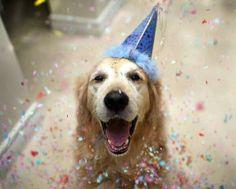 Birthday boy's happy