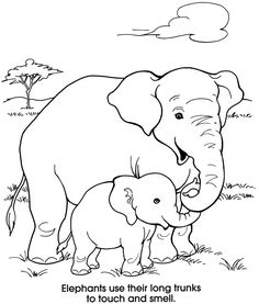 Welcome to Dover Publications Zoo Animals Coloring Fun Zoo Animal Coloring Pages, Elephant Coloring Page, Coloring Book Pages, Coloring Sheets, Applique Patterns, Coloring Pages For Kids, Free Coloring, Zoo Animals, Animal Drawings