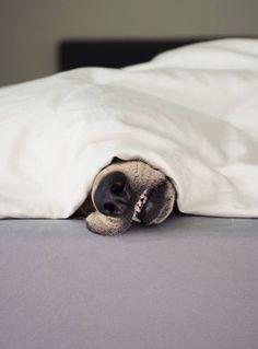 Snuggle buddy.