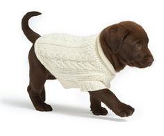 :)OK so i normally Hate when people dress up animals but this is SOO cute <3
