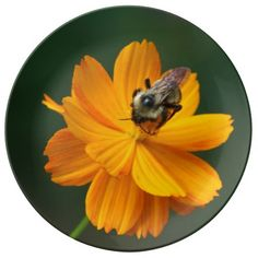 Bumble Bee, Decorative Porcelain Plate. Porcelain Plate
