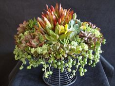 Happy Birthday!  Upcycled cake stand planted with succulents! Photo/Designer Laura Eubanks at Design For Serenity.