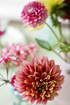 ~~Pink & Pale Yellow Dahlias by wood & wool stool~~