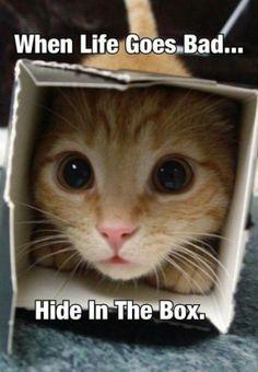 Cat Logic! - 10th March 2014