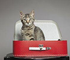 PEDRO HITOMI OSERA: Nas férias, o que é melhor para seu gato?