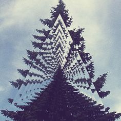 trippy triangle tree