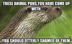 Animal memes...