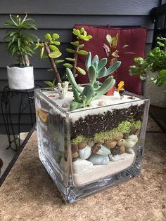 terrario em pote quadrado com areia e musgo