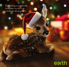 Promoting eco-friendly festivities so she can celebrate life in peace. #RotanaEarth