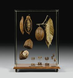 Theobroma cacao (région de Sambirano, Madagascar) | Lot | Sotheby's