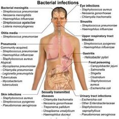 Though very less percentage of bacterial species causes infections, but they become very severe and invasive once they overcome the body's defenses. In such cases, many times antibiotics treatment is given and it is continued for three to four weeks or even for months, but such treatments often have mild to severe side-effects ranging from general weakness, nausea, vomiting, and body rashes to more severe diarrhea, abdominal pain and liver problems. The most prominent side effect is that a…