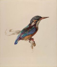 Study of a Kingfisher, with dominant Reference to Colour John Ruskin, probably October 1871