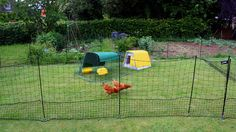 Give hens extra room for free-ranging!