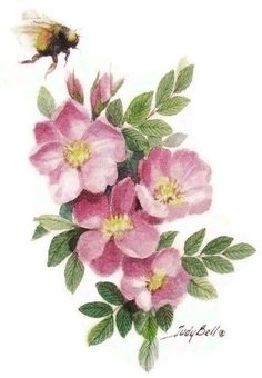 Prairie Roses -Wildflower – Bumble Bee – Print – Watercolor Painting - All About Watercolor Flowers, Watercolor Paintings, Original Paintings, Art Floral, Wildrose Tattoo, Flower Prints, Flower Art, Rosen Tattoos, Bee Tattoo